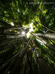 Hana Bamboo Forest | Hawaii Pictures of the Day