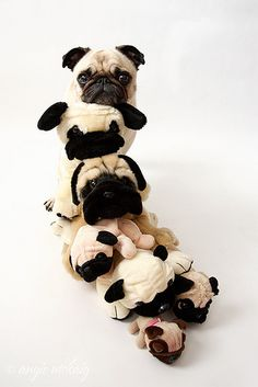 One of the pugs is not like the others!