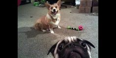 A concerned dog (elvendude via Reddit)