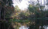 natural Florida