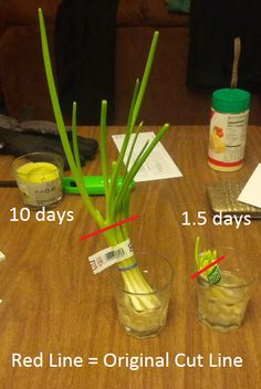 Regrow Vegetables: Plenty of vegetables can be regrown from scraps. It's a great way to save money and make the most out of food. Source: Imgur regrow veget, vegetables, regrow foods, garden, chive, frugal tips, green onions, regrown, regrow green