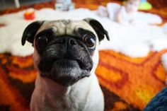 Mind Readers? Your Dog and the Science of Understanding Emotion | Apartment Therapy