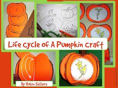 life cycle of a pumpkin 3D craft. I am teaching about seeds and plants...this might be fun!