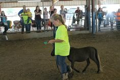 Show Pictures - Natural State Miniature Horse & Shetland Pony Association