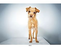 Pictures of Bruce a Terrier (Unknown Type, Medium) Mix for adoption in New York, NY who needs a loving home.