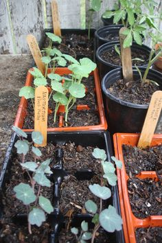 Starting seeds for your garden