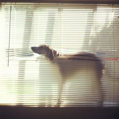 Maddie in the Blinds.