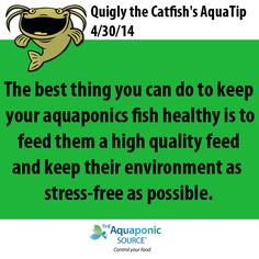 The best thing you can do to keep your aquaponics fish healthy is to feed them a high quality feed and keep their environment as stress-free as possible.
