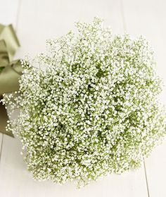 a baby's breath bouquet