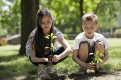 6 Reasons to Plant a Tree | Stretcher.com - Adding value to your home and your life