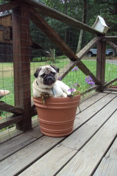 This is Wiggy. She enjoys sleeping in flower pots :)