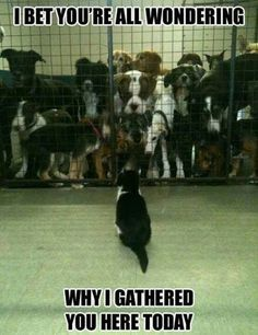 Dogs & Cats - funny pictures - funny photos - funny images - funny pics - funny quotes - #lol #humor #funny