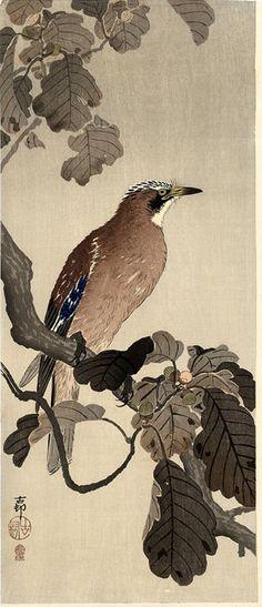 hanga gallery . . . torii gallery: Jay on a Oak Branch by Ohara Koson