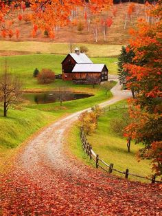 Fall farm....