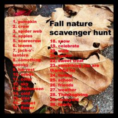 Go Explore Nature: Fall Nature Photo Scavenger Hunt  I love scavenger hunts, they are my favorite activity for groups. I feel it plays to all the children`s strengths. It also builds team work accomplishing the list, as well as learning through peers.