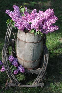 lilacs in nail keg