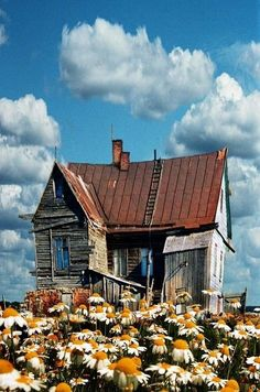 farm, old homes, wooden houses, dream, daisi, old houses, beauty, flowers garden, abandoned houses