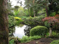 beautiful japanese garden with ornamental plants