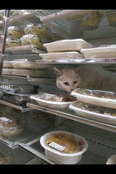 Twitter / mnr0130: かずきが、大阪のコンビニ行ったら 猫おってんて (笑) 爆笑 ...