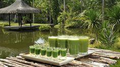 Enjoy a Wheatgrass or Green Juice by the waterat Farm Health #Detox Resort