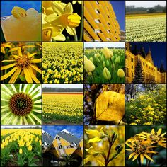 (2011-05) Collage of yellows
