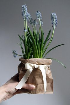 Bouquet of the week: dressing up a plastic pot with a brown paper bag, gardenista