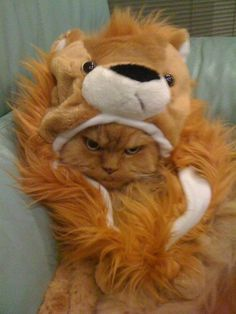 Lion hat kitty, not happy