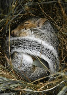 Baby Squirrel Sleeping....