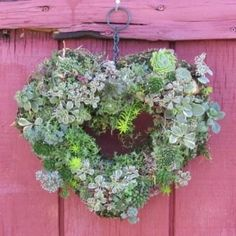 Succulent heart