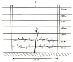 Fruitboom leiden