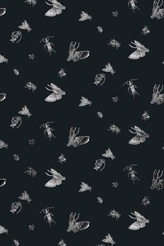 Timorous Beasties Wallcoverings - Insect