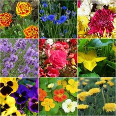 another pinner said12 edible flowers and how to use them!