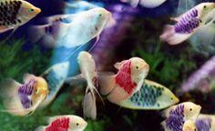 Goldfish by Mika Ninagawa
