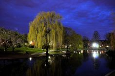 Boston Commons, Boston - http://media-cache-ec5.pinterest.com/upload/263531015665584498_YEvrOvSz.jpg