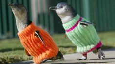 Sweater weather! Penguins!!!