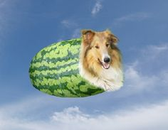 feeling melon collie?