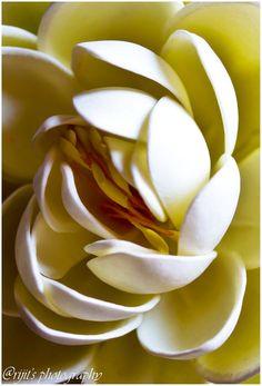 ~~ Lotus story ~~