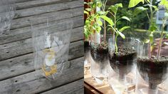 clever uses - Turn a Soda Bottle into a Worry-Free Self-Watering Planter