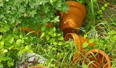 Container Gardening: Terracotta or Wood?