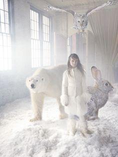Creatures rabbit, fairies, winter, polar bears, dreams, fairy tales, owl, white, fairi tale