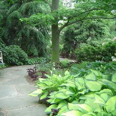 Landscape Woodland Garden Design, love the walking path