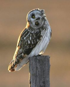 bird, anim, stuff, funny pictures, funni, idiot, quot, owls, thing