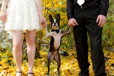 Guide to involving your dog in your wedding