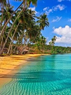 A collection of tropical beach pictures -Fascinating Caribbean Beach