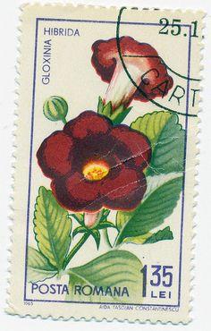 1965 Romanian Stamp - Gloxinia hibridia