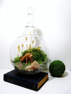 Woodland bowl terrarium.