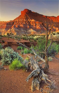 Red Rock Formation and Mesquite Snag - Utah