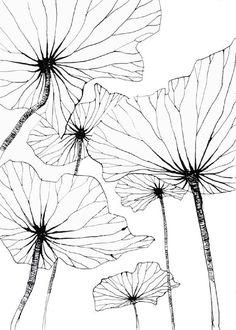 Lotus by Stéphanie Ledoux