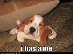 Awwwwww... beagl, puppies, anim, funny dogs, beanie babies, pet, funni, minis, baby dogs