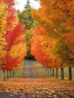 Beautiful lane in orange and red